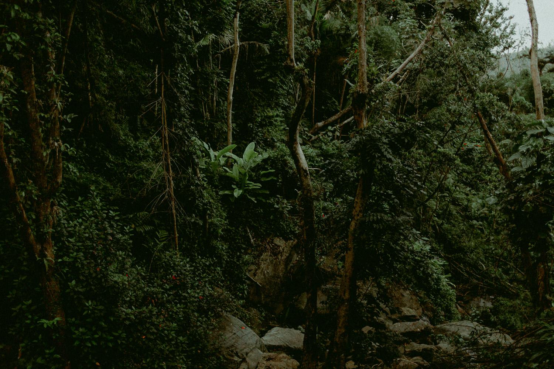 luquillo puerto rico el yunque rainforest